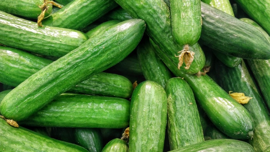 Grüne Bio-Gurken unverpackt